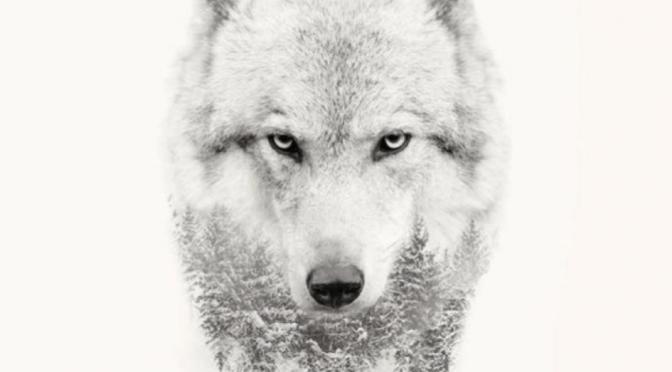 LOAN WOLF GW36+